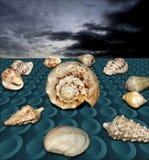 Seashell на сухом конференции II Стоковое Фото