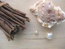 seashell пачки Стоковое фото RF