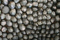 seashell перлы мати Стоковое фото RF