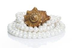 seashell перлы ожерелья Стоковые Фото