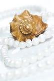 seashell перлы ожерелья Стоковое фото RF