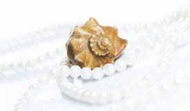 seashell перлы ожерелья Стоковые Изображения RF