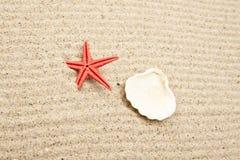 seashell перлы Стоковая Фотография RF