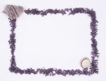 seashell песка граници Стоковые Фотографии RF