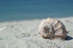 seashell пляжа Стоковые Изображения