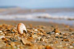 Seashell раковины моря pompilius Nautilus на пляже отработанной формовочной смеси, острове Стоковая Фотография