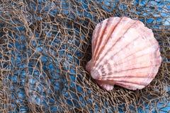 seashell рыболовной сети Стоковое фото RF