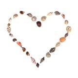 seashell сердца стоковая фотография rf