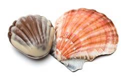 seashell шоколада реальный Стоковая Фотография