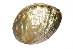 Seashell 1 de perle photographie stock libre de droits