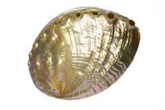 Seashell 1 della perla fotografia stock libera da diritti
