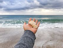 seashell Στοκ Φωτογραφίες