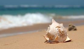 Seashell Immagini Stock Libere da Diritti