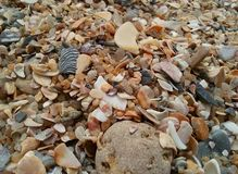seashell obrazy stock