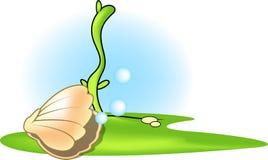 Seashell royalty free stock photo