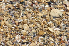 Seashell photos stock