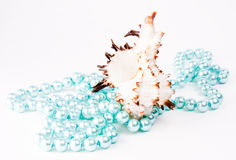 Seashell Lizenzfreies Stockbild