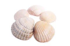 Seashell images libres de droits