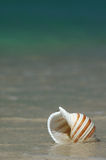 Seashell. Colorful Seashell in Water on a Tropical Beach royalty free stock images