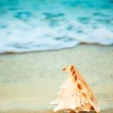 Seashell stockbilder