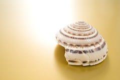Seashell photographie stock libre de droits