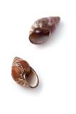 Seashell fotografia stock libera da diritti