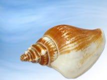 Seashell Foto de archivo