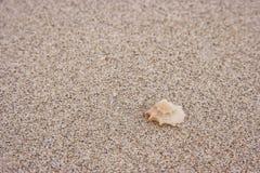 Seashell. fotografia stock libera da diritti