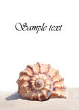 seashell Fotografia Royalty Free