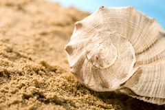 Seashell Stock Photography