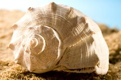 Seashell Stock Photos