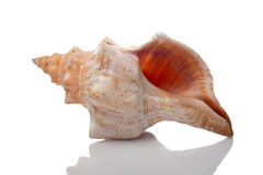 Seashell Stockfotografie