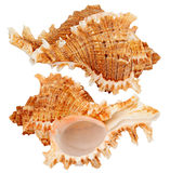 Seashell. Isolated on the white bacground. Collage Royalty Free Stock Photos