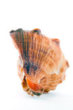 Seashell photos stock