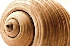 Seashell Fotos de Stock
