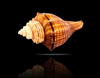 Seashell. Stock Images