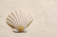 Seashell Royalty Free Stock Image