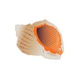 Seashell. Lizenzfreies Stockbild