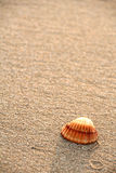 Seashell Fotografie Stock