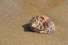 Seashell obrazy stock