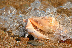 Seashell. On the beach, hit by wave Royalty Free Stock Photos