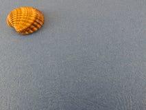 Seashell Стоковое Фото