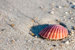 Seashell Photographie stock