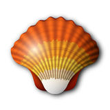 Seashell Obrazy Royalty Free