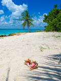 Seashell. Palm tree and seashell. Island Stock Images