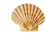 seashell Zdjęcia Royalty Free