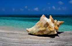 seashell Stockbild