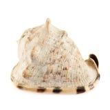 Seashell изолированный над белизной Стоковое Фото