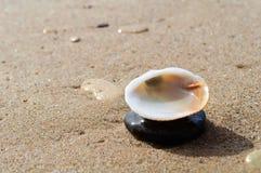 seashell Στοκ εικόνα με δικαίωμα ελεύθερης χρήσης