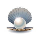 Сияющий жемчуг в раскрытом seashell Стоковые Изображения RF